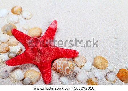 Decorative red sea star with different shells on sand background