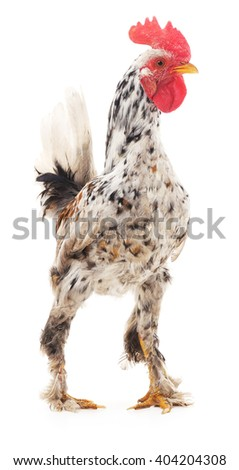 Decorative rooster isolated on a white background. - stock photo