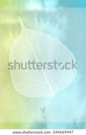 Decorative skeleton leaf isolated