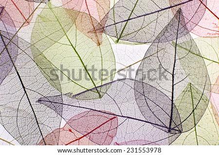 Decorative skeleton leaves background - stock photo