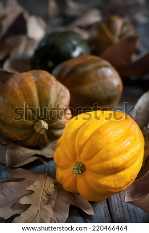 Decorative small pumpkins on fall leaves and wooden background. Selective focus. - stock photo