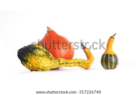 Decorative squashes and pumpkin on white background.  Gourd family. - stock photo