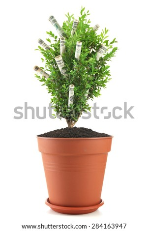 Decorative tree in pot with money isolated on white