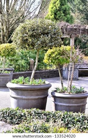Decorative tree pot in the garden - stock photo