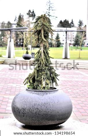 Decorative tree pot in the park on raining day - stock photo