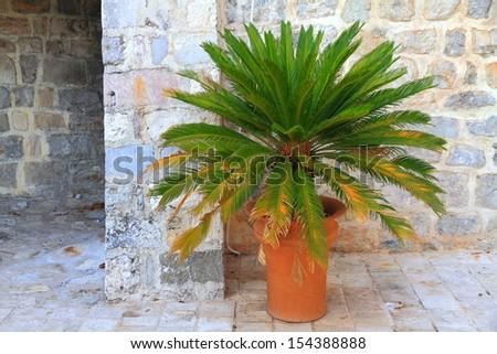 Decorative vegetation inside old Mediterranean town - stock photo