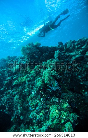 deep blue sea scuba diving diver kapoposang indonesia