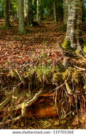 Deep forest - stock photo