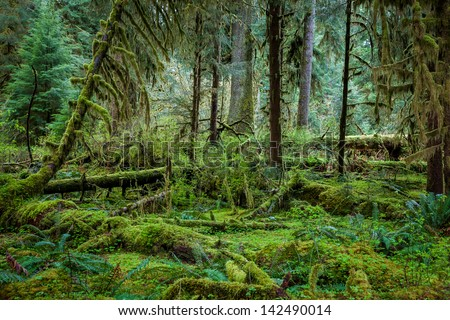 Deep forest in Olympic National Park - stock photo