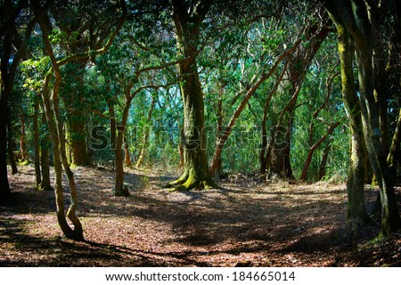 Deep in a old mossy green forest. Forest with a fantasy or fairytale touch.   - stock photo