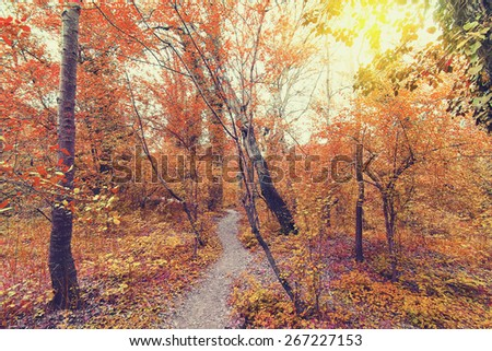 deep in red forest at fall. Vintage style. Nature composition.