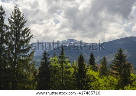 Deep in the mountain forest. Mountains covered with snow and green forest trees. Natural background