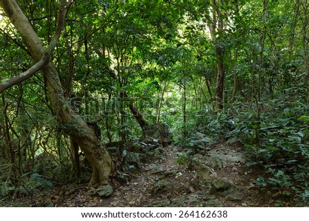 Deep jungle in Cat Ba island, Halong bay, Vietnam - stock photo