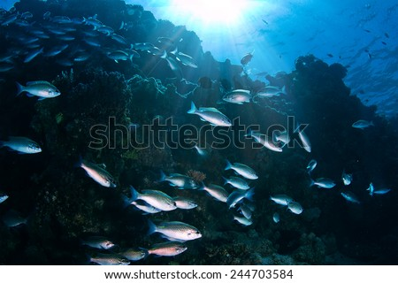 Deep ocean full of life. Underwater coral reef with fish and rays of sun through water surface  - stock photo