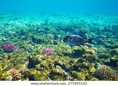 Deep of the sea - stock photo