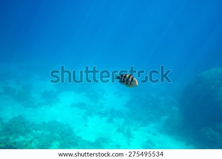 Deep of the sea with fish - stock photo