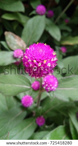 Deep pink flowers like ball stock photo royalty free 725418280 deep pink flowers is like a ball mightylinksfo