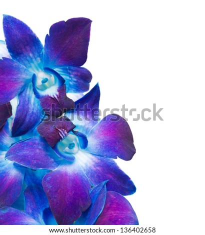 deep purple orchid branch as a background - stock photo