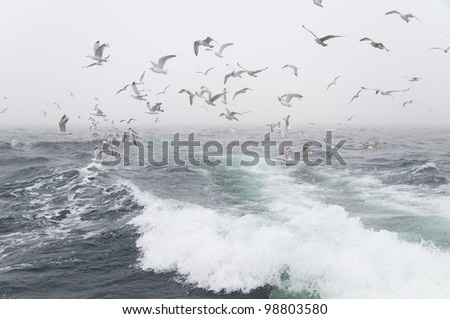Deep sea fishing. The catch of cod. Poland - stock photo