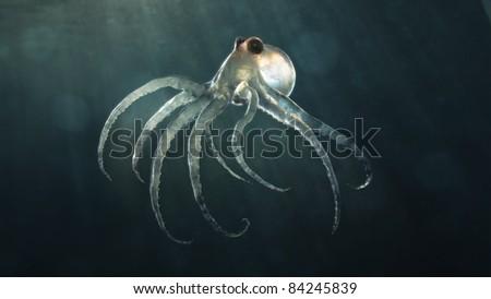 deep sea octopod - stock photo