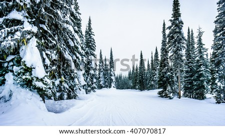 Deep snow pack and snow covered trees at the village of Sun Peaks in the Shuswap Highlands of British Columbia, Canada