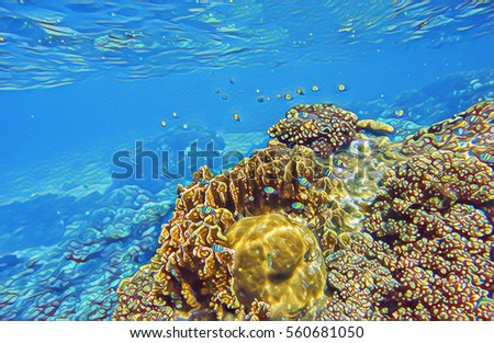 nature coral underwater landscape - photo #43