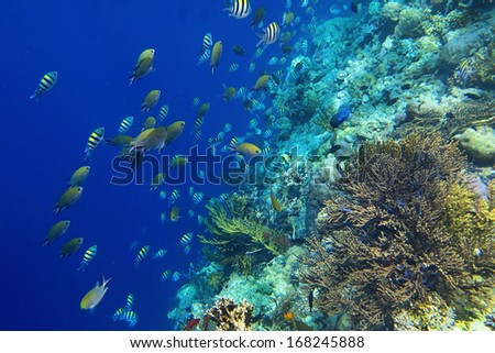 Deep-water coral world with colorful fish