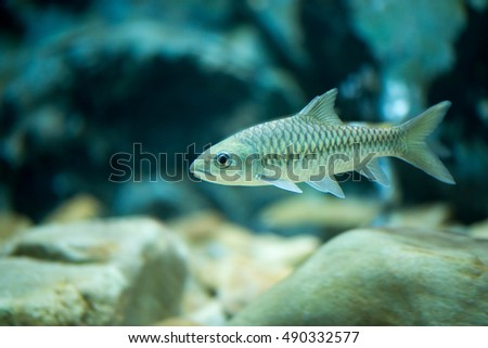 Stock photos royalty free images vectors shutterstock for Deep water fish