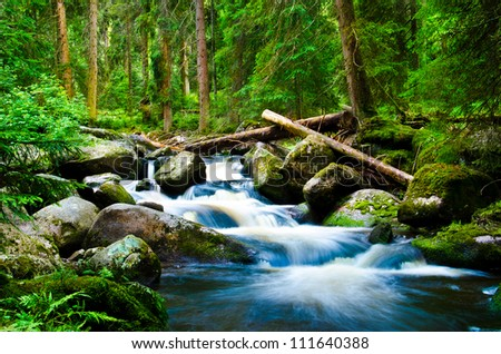 Deep wood - stock photo