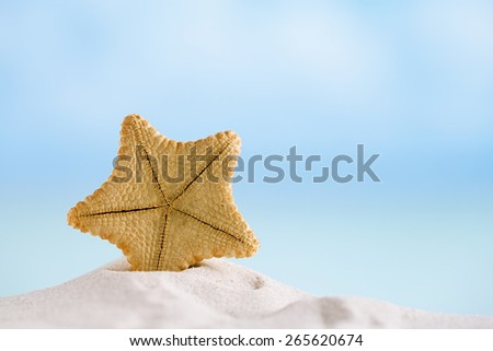 deepwater rare starfish with ocean , beach and seascape, shallow dof - stock photo