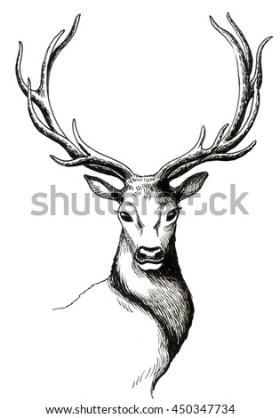Deer Head Isolated Stock Images Royalty Free Images