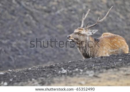 Deer - stock photo