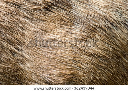 Deer Abstract background Fur - stock photo