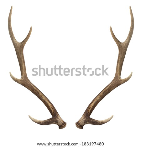 Antler Stock Photos, Royalty-Free Images & Vectors - Shutterstock
