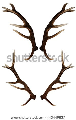 Deer antlers. Isolated on white.four