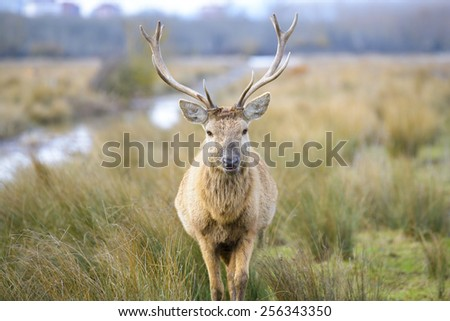 Deer at Salburua park, Vitoria (Spain) - stock photo