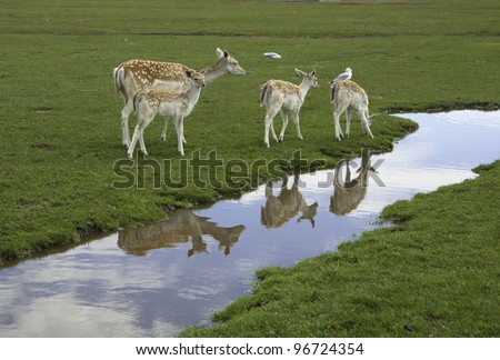 Deer by the Stream A small group of deer relaxed by a clear stream. - stock photo
