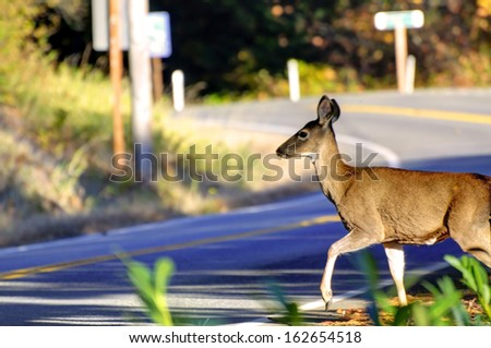 Deer Crossing Road - stock photo