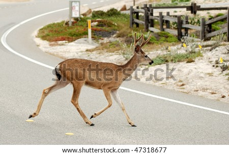 Deer crossing the street - stock photo