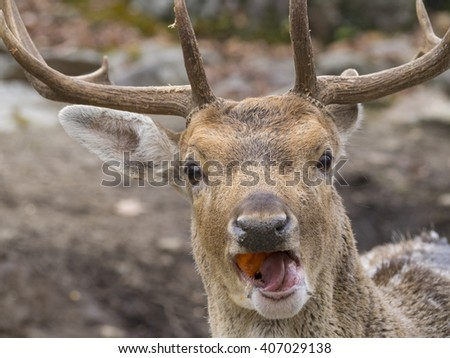 Deer eating