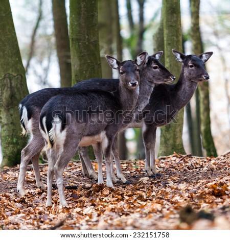 Deer family. - stock photo