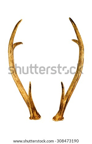 Deer horns isolated on the white background. - stock photo