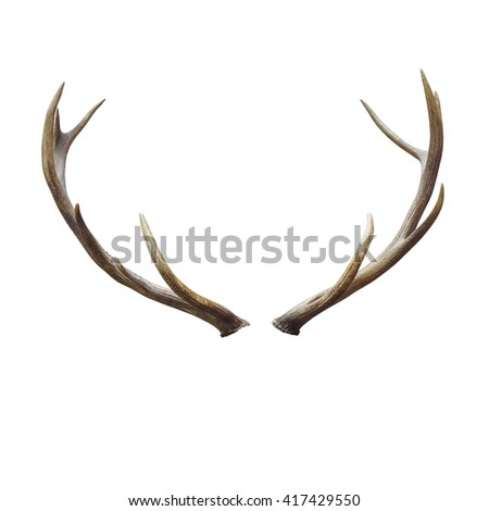 Deer horns isolated on white with clipping path.