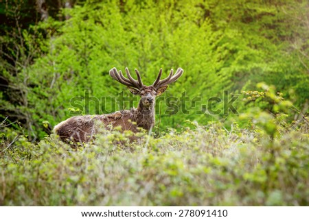 Deer in a forest in the morning - stock photo
