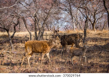 Deer in a reserve in Ranthambor, India