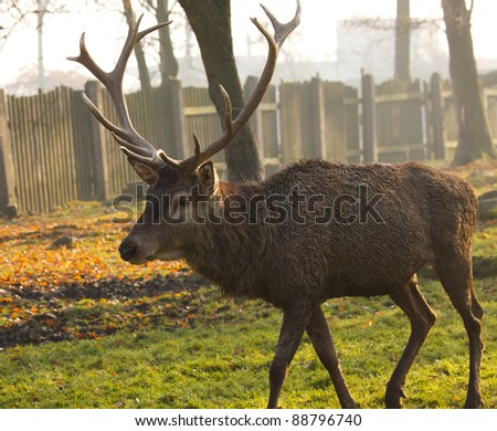 deer in autumn nature