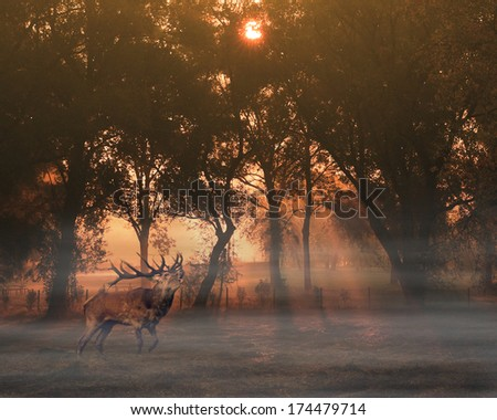 Deer in foggy autumn forest - stock photo