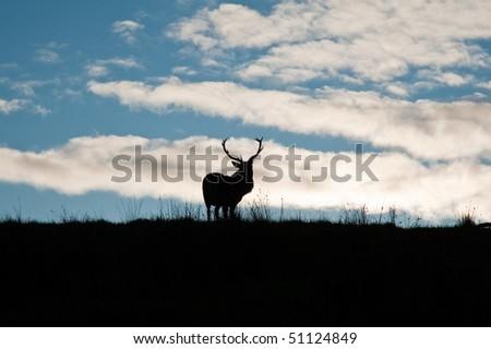 Deer in Jura field - stock photo
