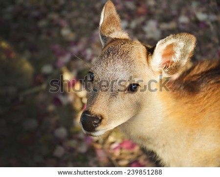 Deer in Nara park Japan/lovely fawn - stock photo