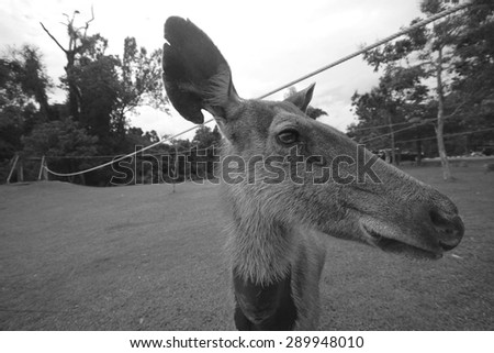 Deer in national park. - stock photo